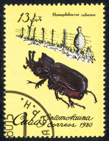 CUBA - CIRCA 1980: A Stamp printed in CUBA shows image of a homophileurus cubanus beetle, from series - entomofauna, circa 1980  Stock Photo - 10291703