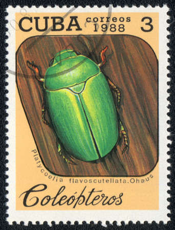 CUBA - CIRCA 1988: A Stamp printed in CUBA shows image of a (platycoelia flavoscutellata, ohaus) beetle, from series - entomofauna, circa 1988 Stock Photo - 10291660