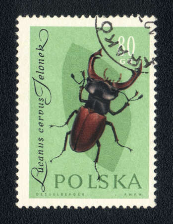 POLAND - CIRCA 1980: A Stamp printed in POLAND shows image of a lucanus cerous jeloner beetle, from series - entomofauna, circa 1980 Stock Photo - 10291648