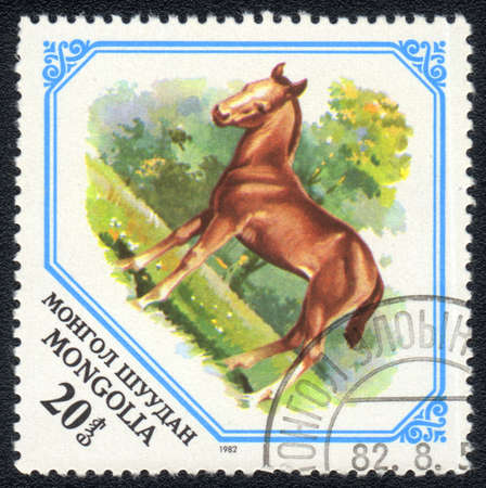 mongolia horse: MONGOLIA - CIRCA 1982: A Stamp printed in MONGOLIA shows image of a young horse, from series - animal