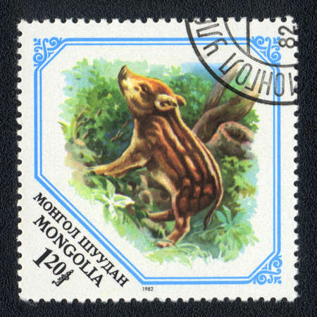 MONGOLIA - CIRCA 1982: A Stamp printed in MONGOLIA shows image of a young pig, from series - animal photo