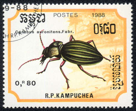 KAMPUCHEA - CIRCA 1988: A stamp printed in Kampuchea shows carabus auronitens, circa 1988 Stock Photo - 10312446