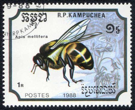 KAMPUCHEA - CIRCA 1988: A stamp printed in Kampuchea shows a Apis mellifera, circa 1988 Stock Photo - 10311827