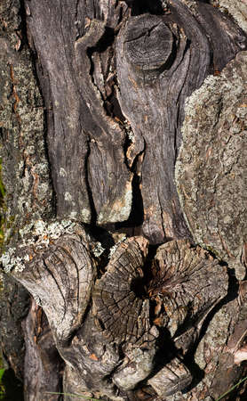 Trunk of old apple-tree - background Stock Photo - 10393592