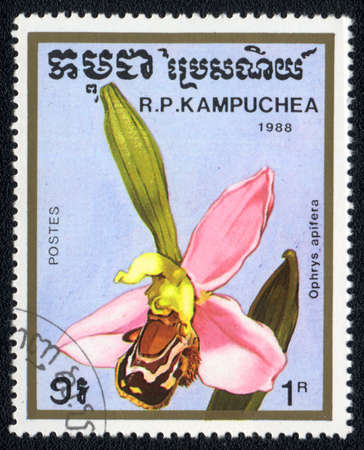 KAMPUCHEA - CIRCA 1988: A stamp printed in Kampuchea shows ophrys apifera , circa 1988 photo