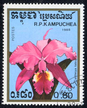 KAMPUCHEA - CIRCA 1988: A stamp printed in Kampuchea shows cattleya labiata , circa 1988 Stock Photo - 10399728