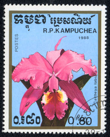 KAMPUCHEA - CIRCA 1988: A stamp printed in Kampuchea shows cattleya labiata , circa 1988 Stock Photo - 10399728