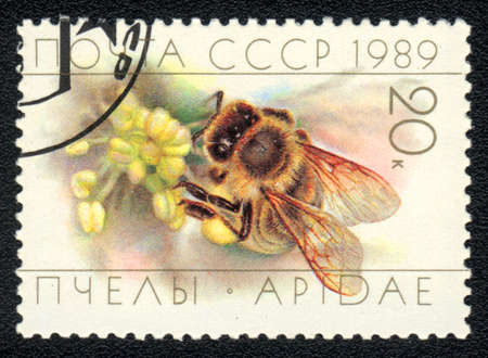 perforated stamp: USSR - CIRCA 1989: A stamp printed in USSR shows bee (apidae), circa 1989