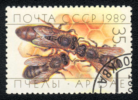 USSR - CIRCA 1989: A stamp printed in USSR shows  bee (apidae), circa 1989 photo