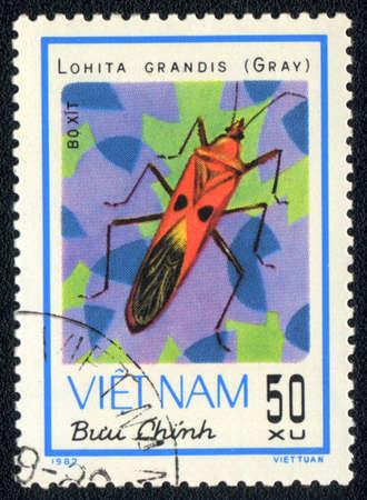 VIETNAM - CIRCA 1982: A stamp printed in VIETNAM shows lohita grandis gray, circa 1982 photo