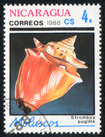 NICARAGUA - CIRCA 1988: A Stamp printed in NICARAGUA  shows image of a strombus pugilis shell, circa 1988  photo