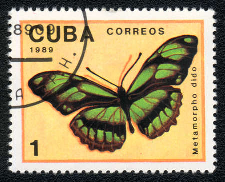 dido: CUBA - CIRCA 1989: A Stamp printed in CUBA shows image of a metamorpho dido butterfly, circa 1989  Stock Photo