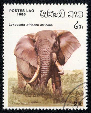 lao: AJO - CIRCA 1986: Un timbre imprim� en AAT montre l'image d'un Loxodonta africana africana, circa 1986