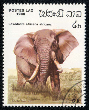 perforated stamp: LAO - CIRCA 1986: A Stamp printed in LAO shows image of a loxodonta africana africana, circa 1986
