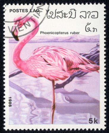 LAO - CIRCA 1986: A Stamp printed in LAO shows image of a phoenicopterus suber, circa 1986 photo