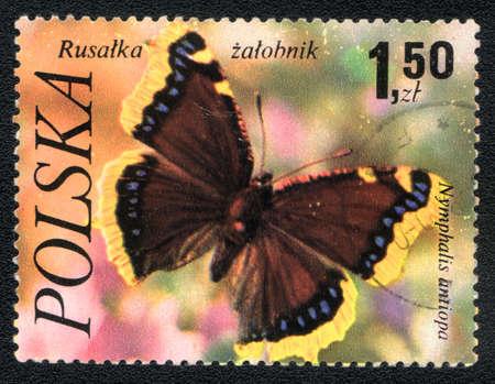 Poland - CIRCA 1980: A Stamp printed in Poland shows image of a butterfly - nymphalis antiopa, circa 1980  photo