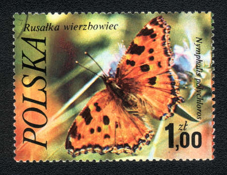 nymphalis: Poland - CIRCA 1980: A Stamp printed in Poland shows image of a butterfly - nymphalis polychloros, circa 1980  Stock Photo