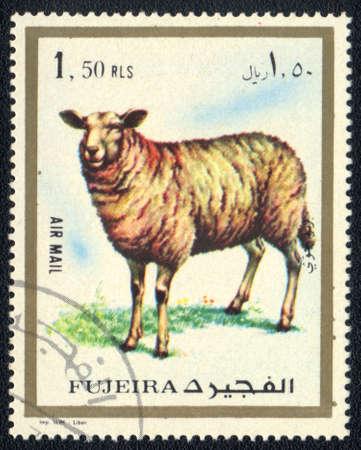 Fujairah - CIRCA 1973: A stamp printed in  Fujairah and shows a Sheep , circa 1973 Stock Photo - 10478003