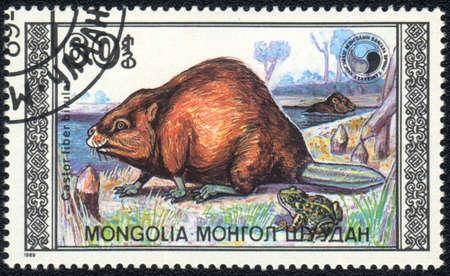 MONGOLIA - CIRCA 1989: A Stamp printed in MONGOLIA shows image of a beaver (Castor fiber birulai), circa 1989 Stock Photo - 10516627
