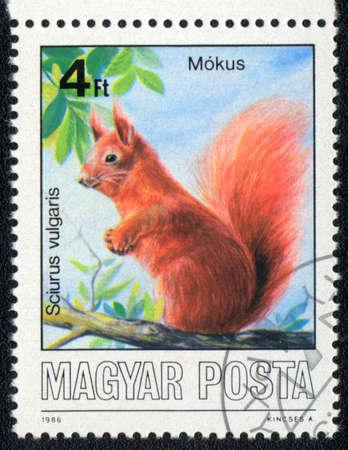 magyar: MAGYAR - CIRCA 1986: A stamp printed in MAGYAR shows sciurus vulgaris, circa 1986 Stock Photo