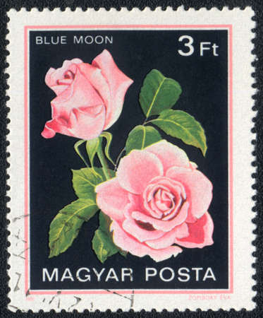 Hungary - CIRCA 1982: A stamp printed in Hungary shows Blue moon rose, circa 1982 photo