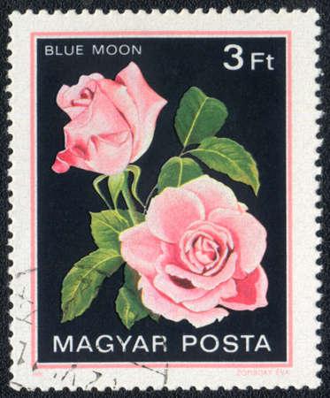 Hungary - CIRCA 1982: A stamp printed in Hungary shows Blue moon rose, circa 1982 photo