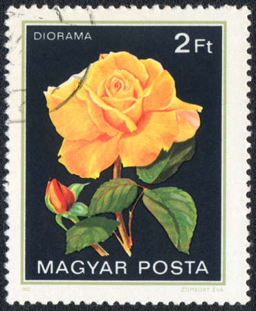 perforated stamp: Hungary - CIRCA 1982: A stamp printed in Hungary shows Diorama rose, circa 1982