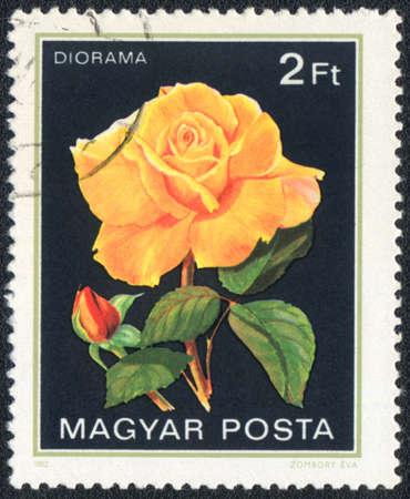 perforated stamp: Hungary - CIRCA 1982: A stamp printed in Hungary shows Diorama rose, circa 1982