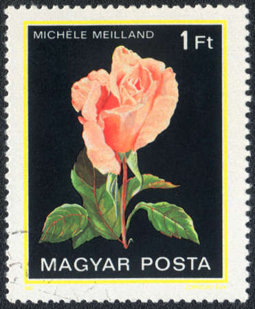 Hungary - CIRCA 1982: A stamp printed in Hungary shows Michele rose, circa 1982 photo