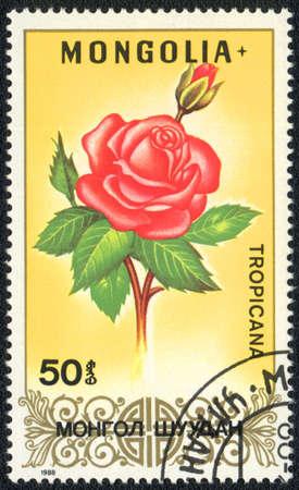 tropicana: MONGOLIA - CIRCA 1988: A stamp printed in MONGOLIA shows Tropicana rose,circa 1988 Stock Photo