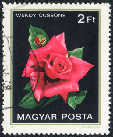 Hungary - CIRCA 1982: A stamp printed in Hungary shows Wendy cussons rose, circa 1982 photo
