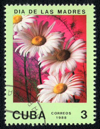 CUBA - CIRCA 1988: A stamp printed in CUBA shows chamomile, circa 1988 photo