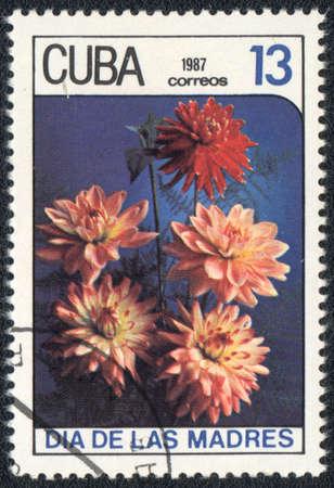 CUBA - CIRCA 1987: A stamp printed in CUBA shows a pink asters , circa 1987 photo