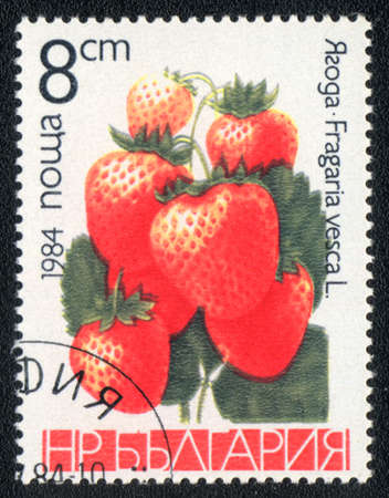 philatelic: BULGARIA - CIRCA 1984: A stamp printed in BULGARIA shows Fragaria vesca, circa 1984 Stock Photo