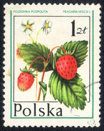 philatelic: POLAND - CIRCA 1981: A stamp printed in POLAND shows Fragaria vesca, circa 1981 Stock Photo