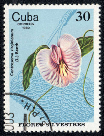 CUBA - CIRCA 1980: A Stamp printed in CUBA shows image of a Centrosema virginianum, circa 1980 Stock Photo - 10676071