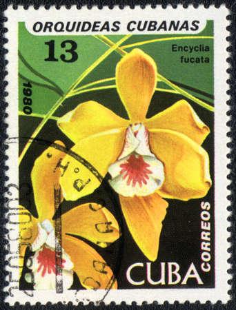 CUBA - CIRCA 1980: A Stamp printed in CUBA shows image of a Encyclia fucata, circa 1980  Stock Photo - 10676073