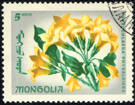 MONGOLIA - CIRCA 1999: A Stamp printed in MONGOLIA shows image of a Physochlaena physaloides, circa 1999 Stock Photo - 10675977