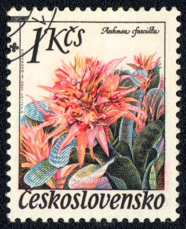 philatelic: Czechoslovakia - CIRCA 1980: A stamp printed in Czechoslovakia shows image of a Aechmea fasciata, series, circa 1980  Stock Photo