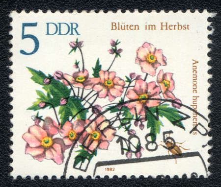 chinese postage stamp: DDR - CIRCA 1982: A stamp printed in DDR shows image of a Anemone hupehensis and  insect, series, circa 1982