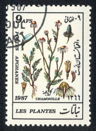 philatelic: AFGANISTAN - CIRCA 1987: A stamp printed in AFGANISTAN shows image of a  herb chamonille, series, circa 1987  Stock Photo