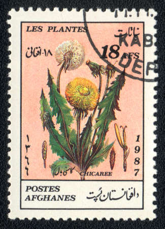 philatelic: AFGANISTAN - CIRCA 1987: A stamp printed in AFGANISTAN shows image of a   Chicaree , herb series, circa 1987