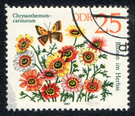 DDR - CIRCA 1982: A stamp printed in DDR shows image of a Chrysanthemum carinatum and  insect, series, circa 1982  photo