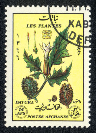 AFGANISTAN - CIRCA 1987: A stamp printed in AFGANISTAN shows image of a   Datura, herb series, circa 1987  photo