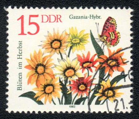 DDR - CIRCA 1982: A stamp printed in DDR shows image of a Gazania and  insect, series, circa 1982  photo