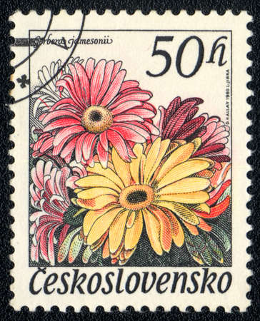 Czechoslovakia - CIRCA 1980: A stamp printed in Czechoslovakia shows image of a gerbera jamesonii, series, circa 1980  photo