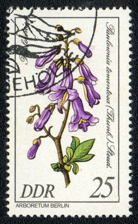 philatelic: DDR - CIRCA 1985: A stamp printed in DDR shows image of a Paulownia tomentosa, series, circa 1985  Stock Photo