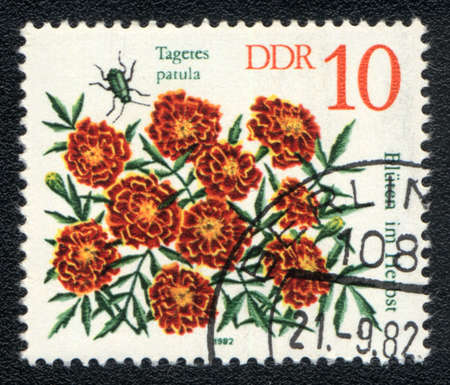 patula: DDR - CIRCA 1982: A stamp printed in DDR shows image of a Tagetes patula and  insect, series, circa 1982  Stock Photo