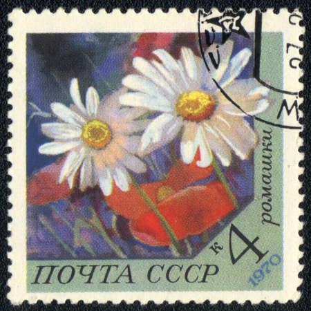 philatelic: USSR - CIRCA 1970: A stamp printed in USSR  shows  a chamomile, series, circa 1970 Stock Photo