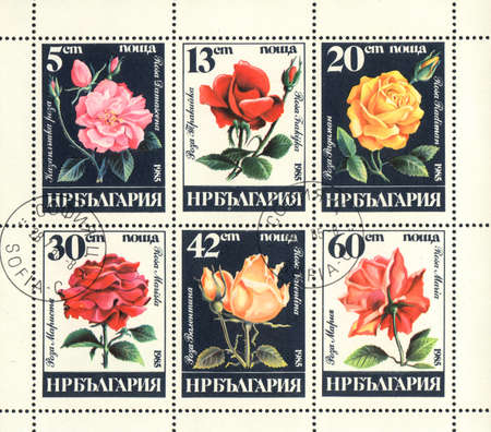 BULGARIA - CIRCA 1985: A stamp printed in BULGARIA  shows  6 varieties of roses on a black and white, series, circa 1985 photo
